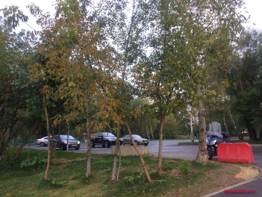 brateevskiy-kaskadnyy-park_6.jpg