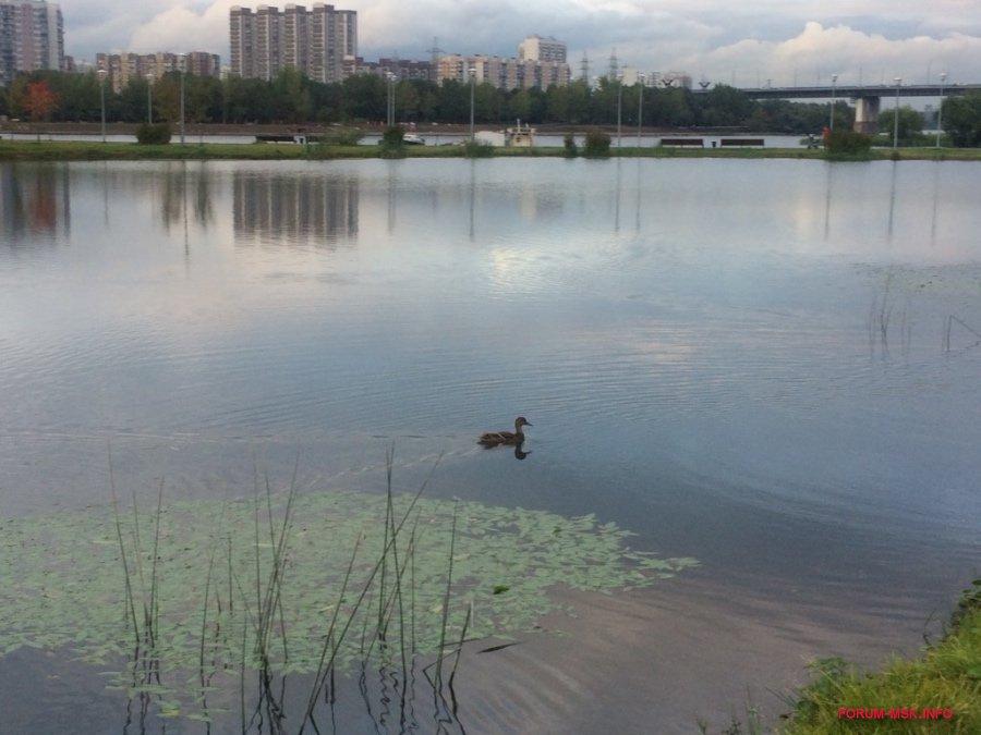 brateevskiy-kaskadnyy-park_8.jpg