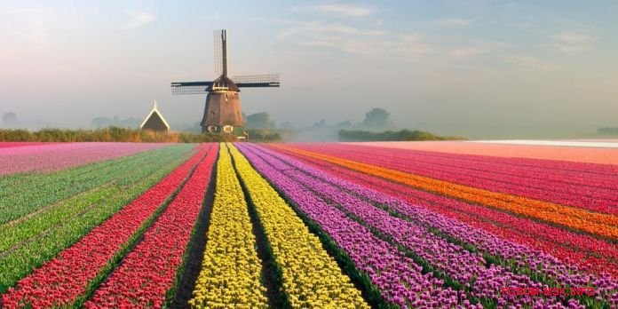 tulip-fields-7.jpg
