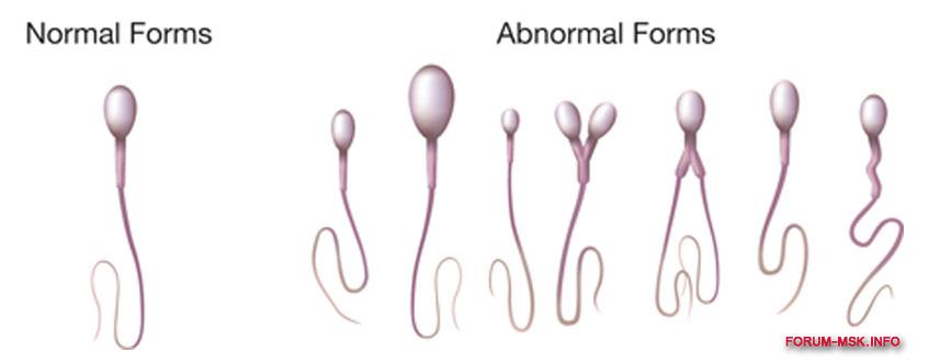 Состав спермы гормон знаю